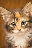 kattungestående Arkivfoto