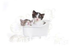 Kattungestående i studion som tar ett bad Fotografering för Bildbyråer