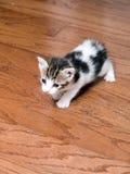 Kattungeundersökning Fotografering för Bildbyråer