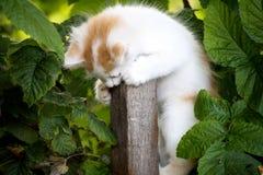 kattungevägen kör white Royaltyfri Fotografi