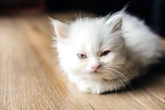 kattungevägen kör white Arkivfoto