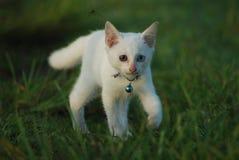 kattungevägen kör white Arkivfoton