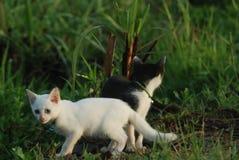 kattungevägen kör white Fotografering för Bildbyråer
