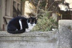 kattvägg Arkivfoton