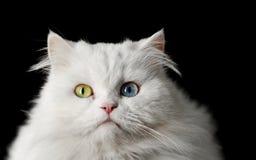 kattwhite arkivfoto