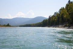 Katun flod i Altai Royaltyfria Foton