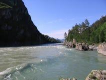 Katun flodflöden till och med de höga Altai bergen med turkosvatten royaltyfria bilder