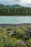 Katun Fluss Lizenzfreie Stockfotografie