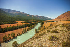 Katun-Fluss, Altai-Berge Lizenzfreies Stockbild