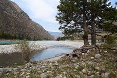 Katun river. Mountain Altai landscape. Russia. Stock Photography