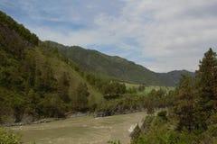 Katun rzeka w Altai, Chemall Zdjęcie Stock
