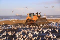 Katwijk för strandfödabulldozer Royaltyfria Foton