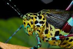 katydid сверчка bush цветастое стоковая фотография