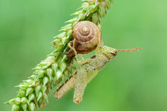 Katydids and Snail Royalty Free Stock Images