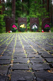 Katyn stock images
