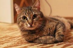 Katze КÐ-¾ Ñ ' Lizenzfreie Stockfotografie