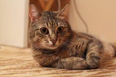 Katze КÐ-¾ Ñ ' Stockfotografie