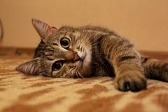 Katze КÐ-¾ Ñ ' Lizenzfreies Stockbild