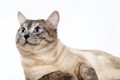 Katze 1 Stockbild