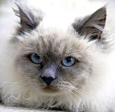 Katze 1   Lizenzfreies Stockfoto