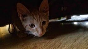 Katze Stockbild