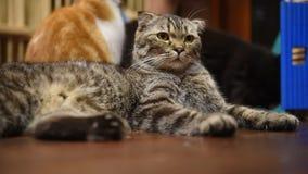 Katze stock video