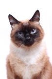 Katze Stockfotos