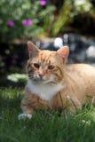 Katze Fotografia Stock Libera da Diritti
