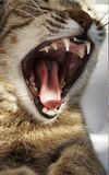 Katze 2 lizenzfreie stockfotografie
