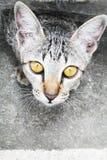 Katze Lizenzfreie Stockfotos