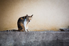 Katze stockbilder