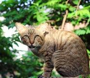 Katze Lizenzfreies Stockbild