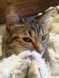 Katze 2 Stockbilder