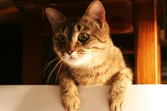 Katze 6 Lizenzfreies Stockbild
