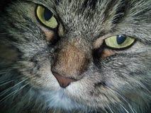 Katze Stockfoto