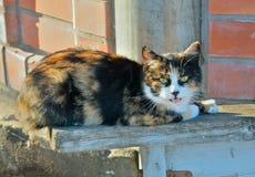 Katze 10 Lizenzfreie Stockfotografie