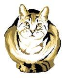 Katze 02 Lizenzfreies Stockfoto