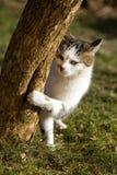 Katze Стоковое Изображение RF