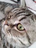 Katze Стоковое Изображение