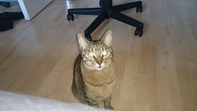 Katze Royaltyfri Fotografi