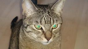 Katze Obraz Stock