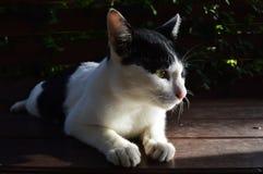 Katze 4 Lizenzfreie Stockfotos
