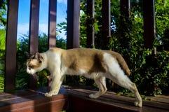 Katze 9 Stockbild