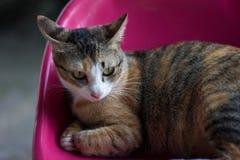 Katze lizenzfreies stockfoto