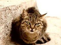 Katze 34 Stockbild