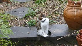 Katze stock footage