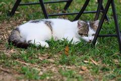 Katze Stockfotografie