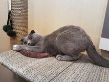 Katze Lizenzfreie Stockbilder