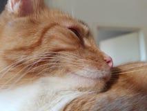 Katze 免版税库存图片
