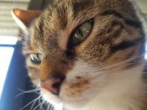 Katze 库存照片